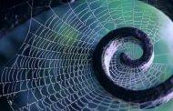 Örümceğin Gizemi